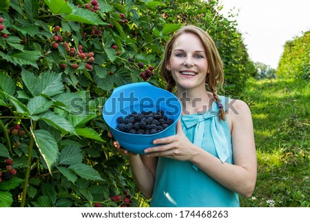 Young brunette woman in blue dress picking blackberries outdoors