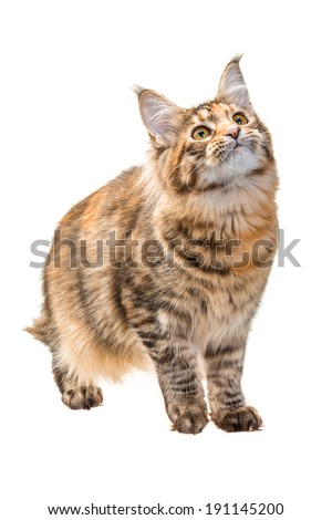 Young cat - stock photo