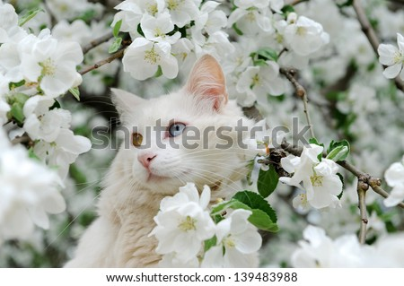 Young cat between flowers - stock photo