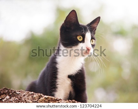young cat, black and white,  26 - stock photo