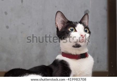young cat, black and white