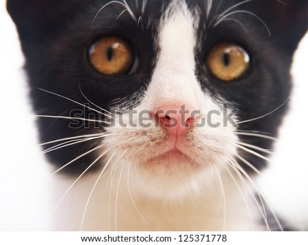 young cat, black and white,  close-up, front view, focus is on the nose, the eyes are in background - stock photo