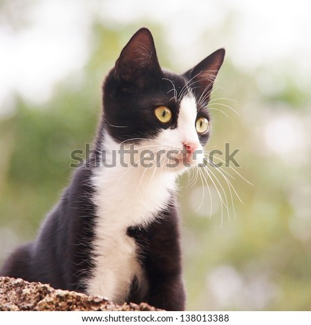 young cat, black and white,  25, square - stock photo