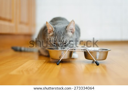 young cat eating food from a plate - stock photo