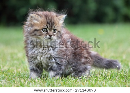 Young cat, green outdoor