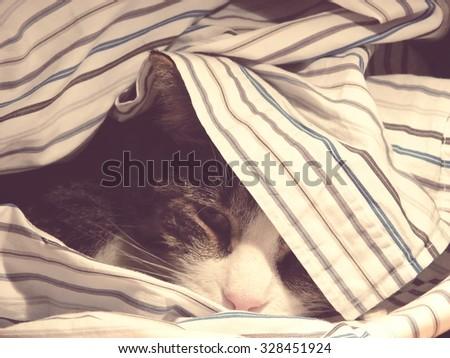 young cat hidden under shirt; vintage filter effect - stock photo