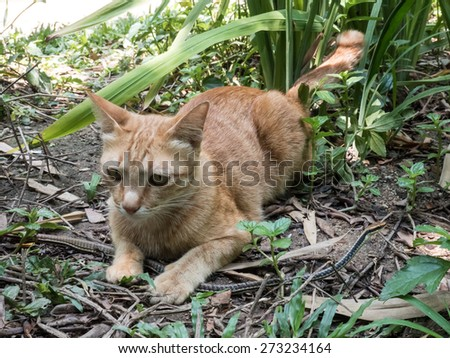 Young cat hunts and plays with bronzeback snake in the jungle - stock photo