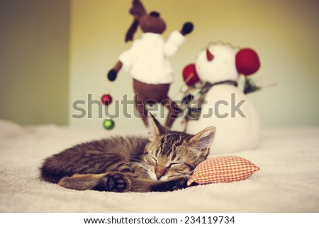 Young cat in a Christmas setting, lying on the bed  - stock photo
