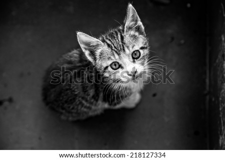 Young cat in box - stock photo