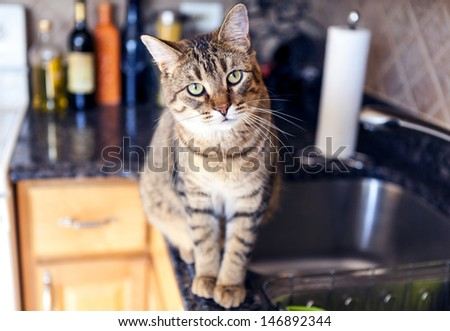 Young Cat In The Kitchen - stock photo