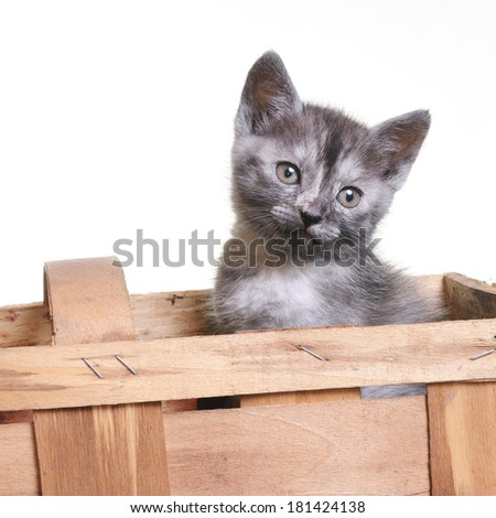young cat in wooden box over white background - stock photo