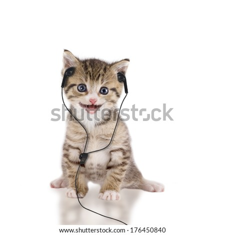Young cat is listening to music with headphones / headset on white background - stock photo