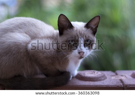 Young cat looking , soft background - stock photo