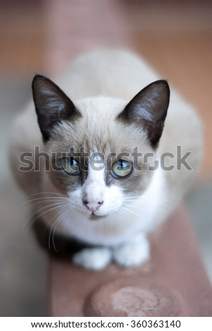 Young cat looking the bird, soft background - stock photo