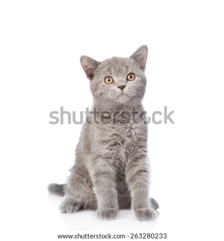 Young cat looking up. isolated on white background