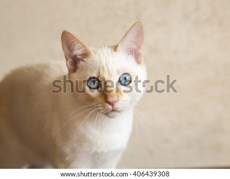 Young cat looks directly at the camera - stock photo