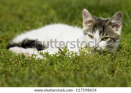 young cat lying contentedly in the grass and relaxing in the sun