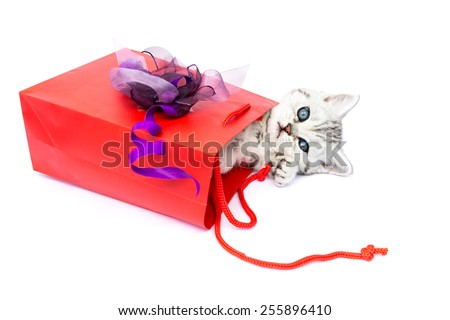 Young cat lying in red bag with decoration isolated isolated on white background - stock photo
