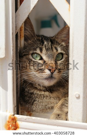young cat lying on the windowsill - stock photo