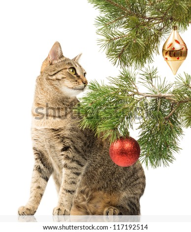 Young cat next to Christmas tree on white - stock photo