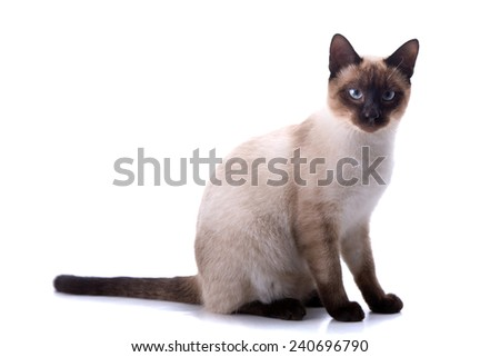 young cat on a white background