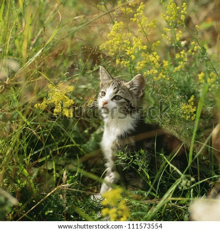 Young cat sitting in the grass