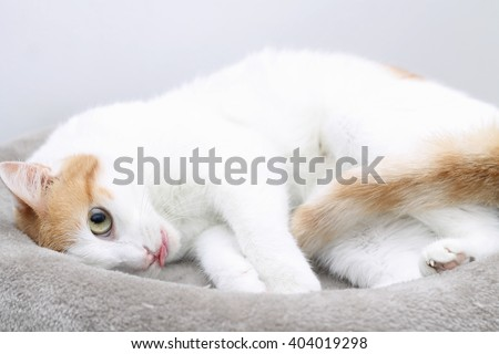 Young cat sleeping on bed with tongue out - stock photo