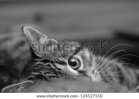 Young cat watchful, wishing to play. Sharp. Black and white - stock photo