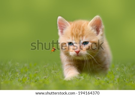 Young cat with ladybug on a green field in the sunshine - stock photo