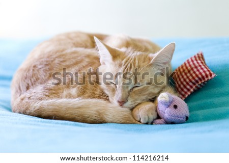 Young Cat With Red Pillow - stock photo