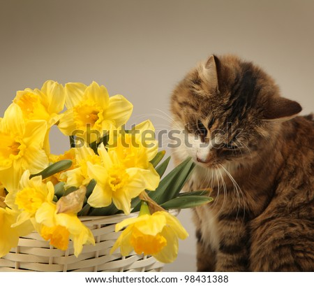 young cat with yellow flowers - stock photo