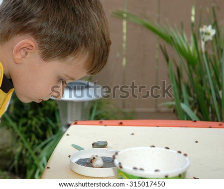 young caucasian preschool age boy looking at ladybugs on a table outside with plants in the background. Fascinated by the bugs - stock photo