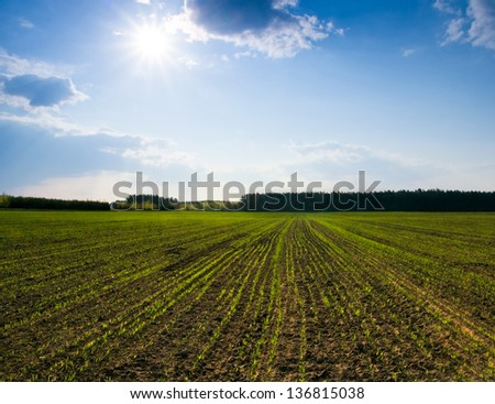young cereal field. - stock photo