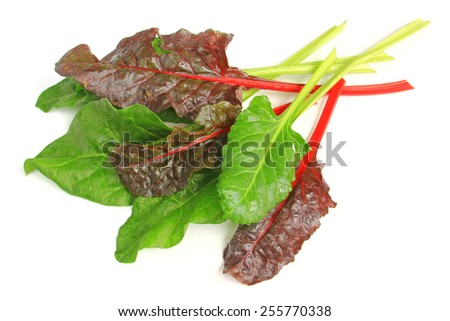 young chard leaves (Beta vulgaris subsp. vulgaris) isolated in front of white background - stock photo