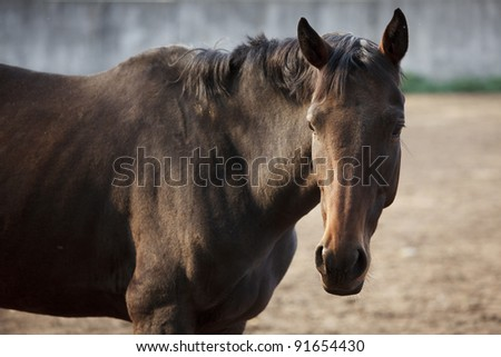 Young chestnut in the corral autumn day - stock photo