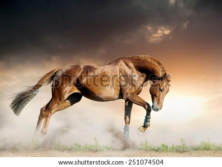 Young chestnut stallion running un sunset on the wild - stock photo