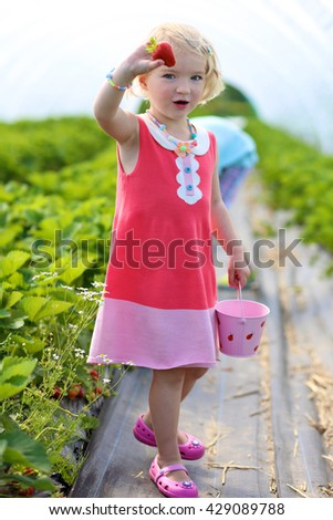 Young children picking strawberries in the farm. Small toddler girl harvesting healthy berries in the garden. Healthy bio food concept. Leisure activity for family with kids - stock photo