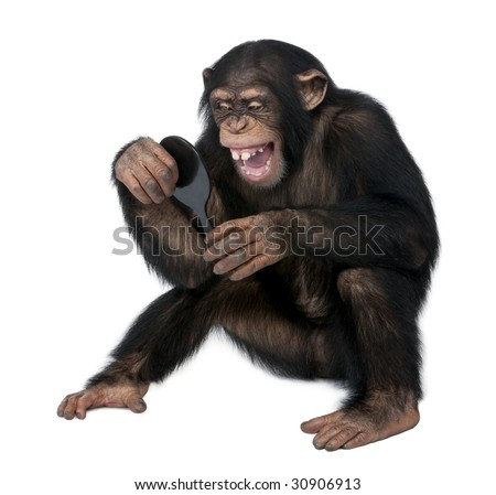 Young Chimpanzee looking at himself in a mirror in front of a white background - stock photo