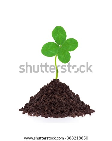 Young clover plant in ground isolated on white background - stock photo