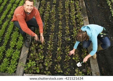 young couple crouching in their garden and planting vegetables - stock photo