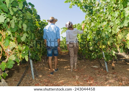 Young couple, vine growers, walk through grape vines inspecting the fresh grape crop. - stock photo
