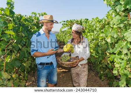 Young couple, vine growers, walk through grape vines inspecting the fresh grape crop.