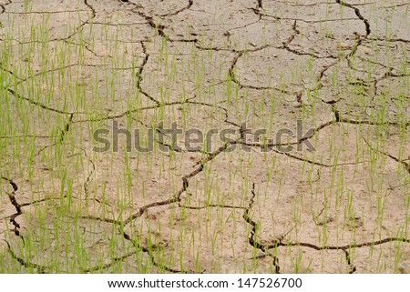 young crops growing on cracked soil  - stock photo