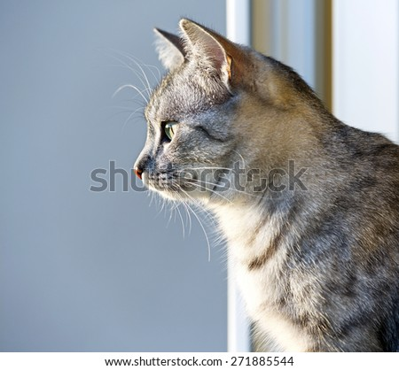 Young curious cat looking through the window on warm sunset light, cat on evening light, Cat portrait close up, only head crop, space for advertising and text, cat head - stock photo