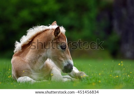 Young cute foal outdoor - stock photo