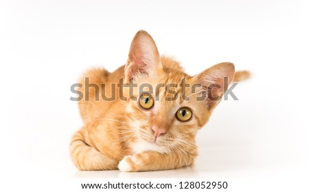 young cute ginger cat looking