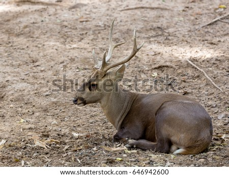 young deer lying on ground