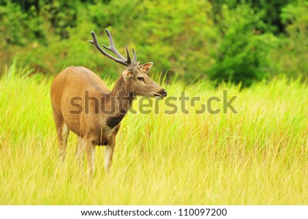young deer posing in the forest - stock photo