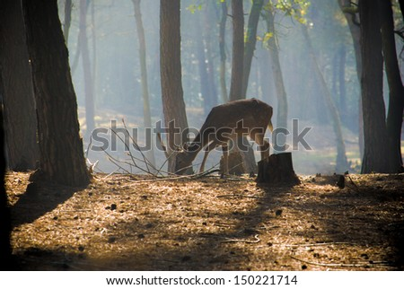 young deer posing in the forest, netherlands - stock photo