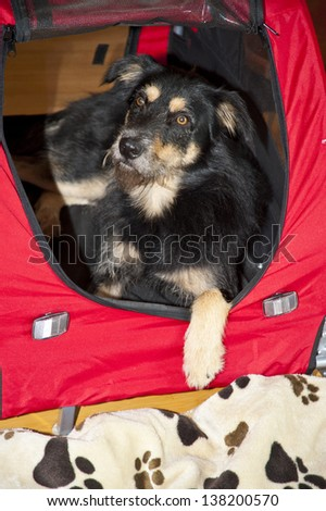 Young Dog in a Box - stock photo